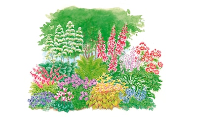 Pflanzenset »Schattenpflanzen«, 11 Pflanzen kaufen