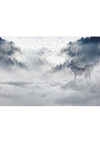 Consalnet Vliestapete »Wolf im Nebel«, Motiv kaufen