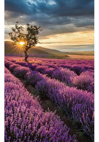 Wall-Art Vliestapete »Lavendelblüte in der Provence« kaufen