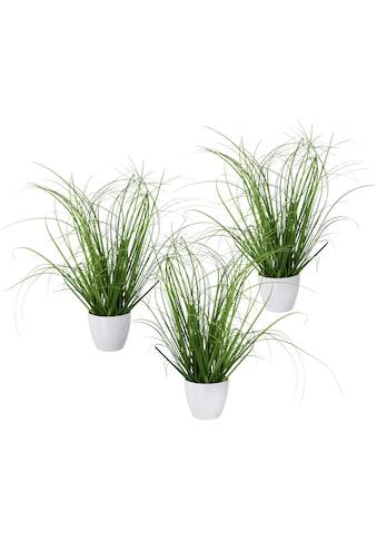 Creativ green Kunstgras »Grasbusch«, 3er Set, im dekorativen Kunststofftopf kaufen
