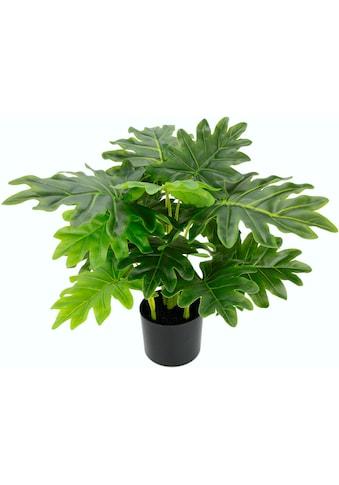 I.GE.A. Kunstpflanze »Philopflanze« (1 Stück) kaufen