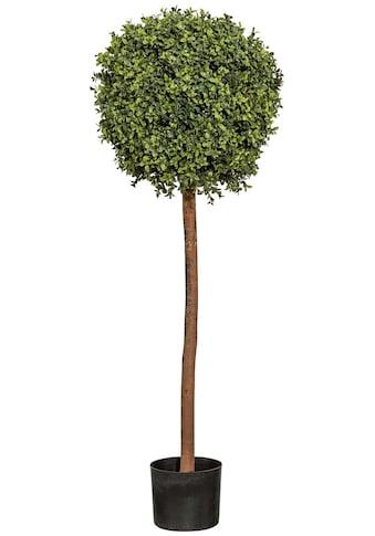 Creativ green Kunstpflanze »Buchskugelbaum« (1 Stück) kaufen