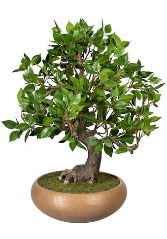 Creativ green Kunstbonsai »Bonsai Ficus« (1 Stück) kaufen