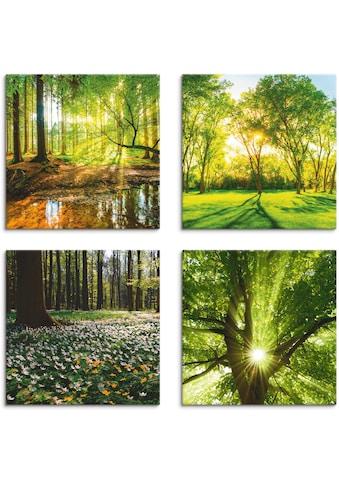 Artland Leinwandbild »Wald Bach Frühling Windrosen Sonne Baum«, Wald, (4 St.) kaufen