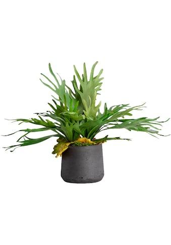 Blütenwerk Kunstpflanze »Staghorn« (1 Stück) kaufen