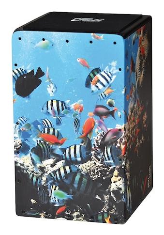 Voggenreiter Cajon »Aqua Blog«, Made in Europe kaufen