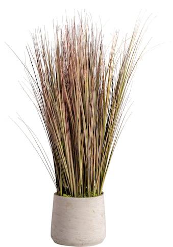 Blütenwerk Künstliche Zimmerpflanze »Sylt« (1 Stück) kaufen