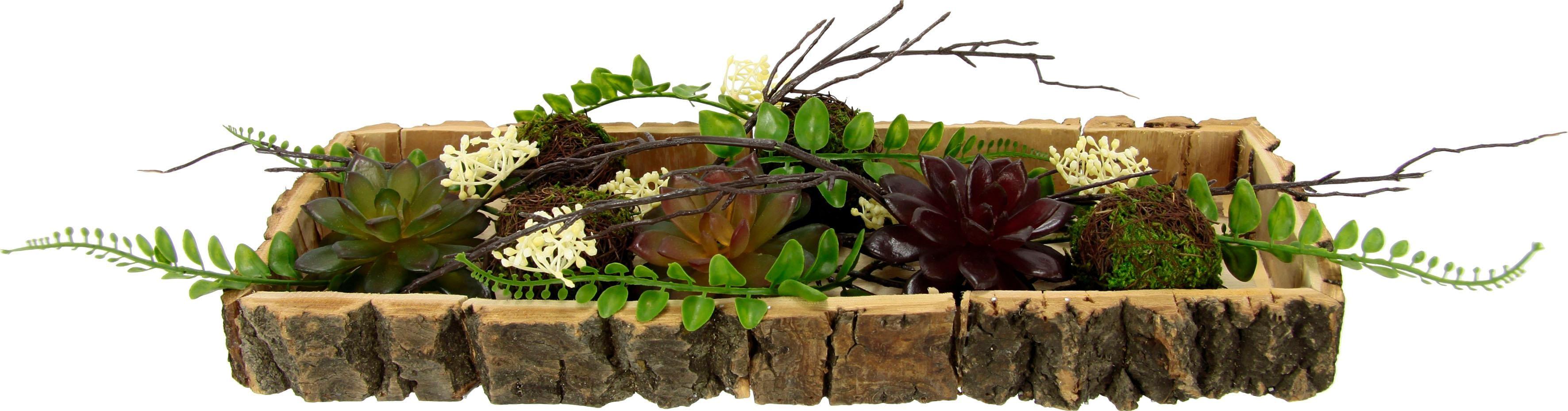 Home affaire Holztablett, Sukkulenten gross | Dekoration > Dekopflanzen > Pflanzen | Grün | home affaire