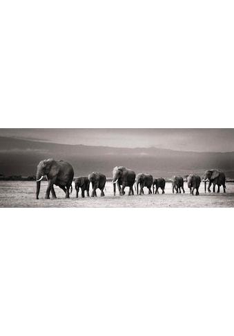 Reinders! Wandbild »Elefantenparade« kaufen