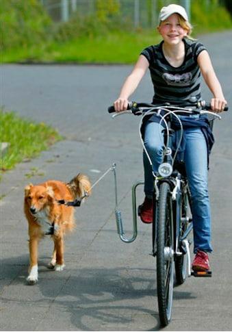 HEIM Fahrradleine, mit Fahrradhalter für Hunde bis 20 kg kaufen