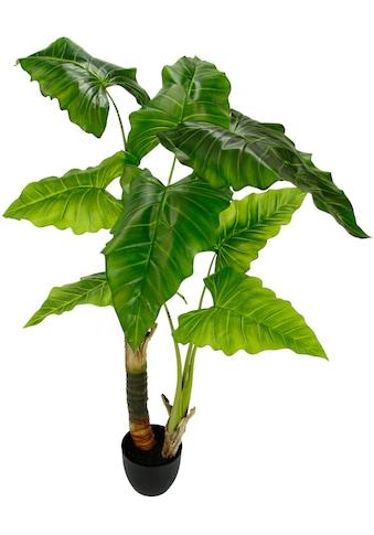 I.GE.A. Kunstpflanze »Blattpflanze« (1 Stück) kaufen