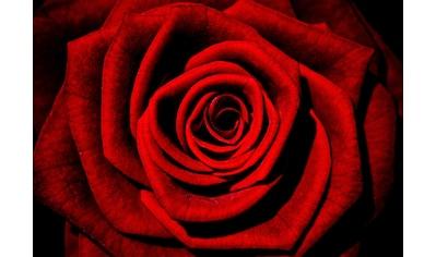 CONSALNET Vliestapete »Rote Rose«, in verschiedenen Größen kaufen