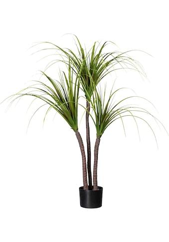 Creativ green Künstliche Zimmerpflanze »Drachenbaum« kaufen