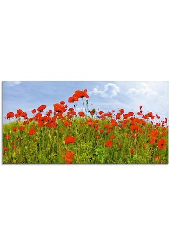 Artland Glasbild »Mohnblumen Panorama«, Blumen, (1 St.) kaufen