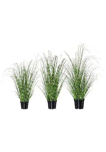 Creativ green Kunstgras »Miscanthus« kaufen