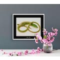 KOMAR Wanddekoration »Green Grass Lizard«