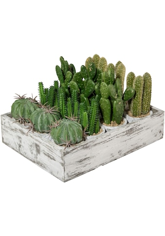 Creativ green Kunstkaktus »Kaktus«, 12er Set, im Paperpot kaufen