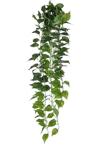 Creativ green Kunstranke »Philodendron-Hänger« kaufen