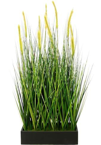 I.GE.A. Kunstpflanze »Fuchsschwanzgras im Topf« (1 Stück) kaufen