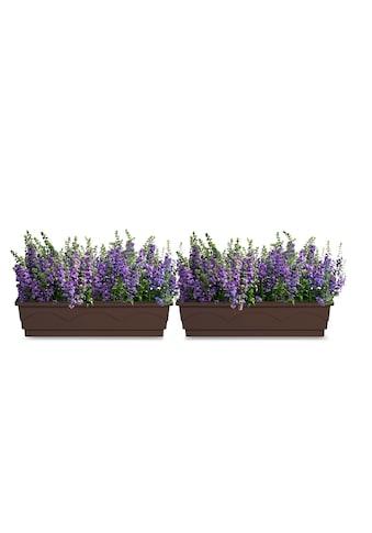 Emsa Blumenkasten »Lago A. Comfort« (1 Stück) kaufen