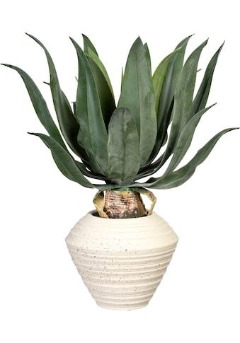 Creativ green Künstliche Zimmerpflanze »Agave americana«, in Keramikschale kaufen