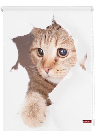 LICHTBLICK ORIGINAL Seitenzugrollo »Klemmfix Digital Katze«, verdunkelnd,... kaufen