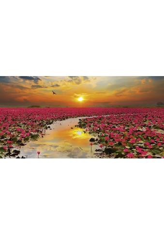 Home affaire Glasbild »S. Plumson: Sonnenschein blühende Lotusblume in Thailand« kaufen