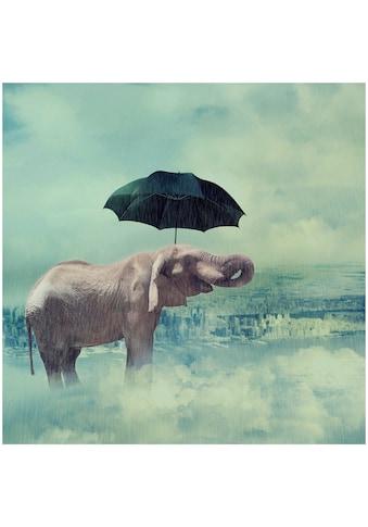 Art & Pleasure Acrylglasbild »Crazy elephant 3«, Elefanten kaufen