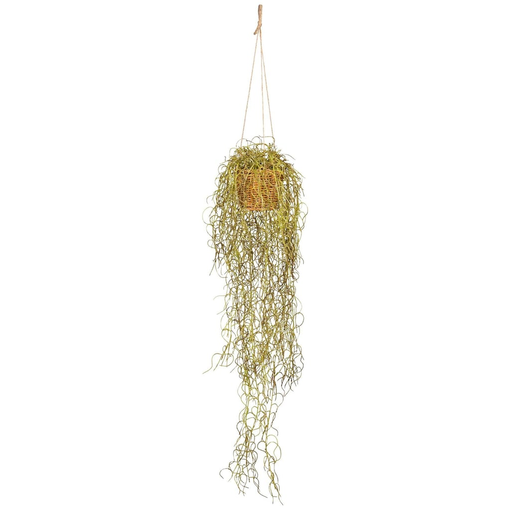 Creativ green Kunstranke »Tillandsien-Hänger«, im Hängekorb