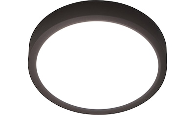 Nino Leuchten LED Deckenleuchte »Puccy«, LED-Board, 1 St., Warmweiß, LED Deckenlampe kaufen