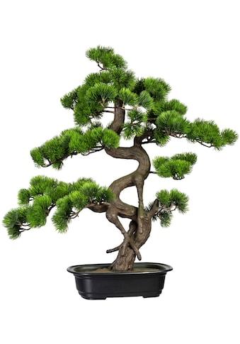 Creativ green Kunstbonsai »Bonsai Kiefer« (1 Stück) kaufen