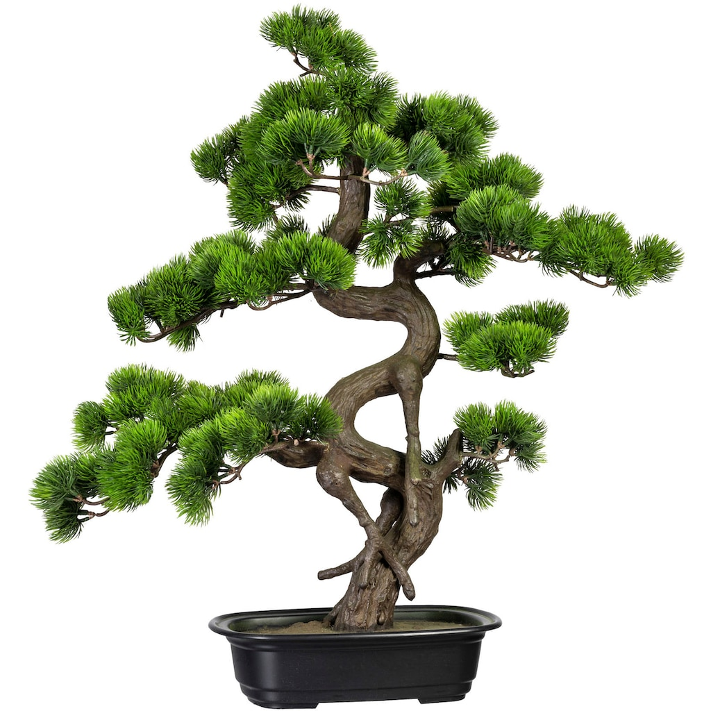 Creativ green Kunstbonsai »Bonsai Kiefer« (1 Stück)