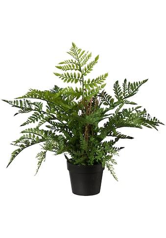 Creativ green Kunstpflanze »Farn« (1 Stück) kaufen