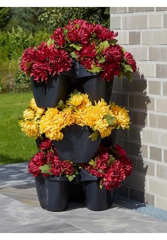 Prosperplast Blumenkasten »CROWN« (Set, 3 Stück) kaufen