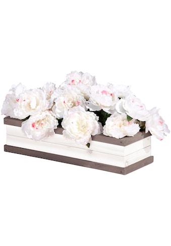 AXI Blumenkasten »Sunny«, BxTxH: 54x19x11,5 cm kaufen