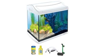 TETRA Aquarium »AquaArt LED Discovery Line«, 20 Liter, BxTxH: 39,5x28x33 cm, weiß kaufen