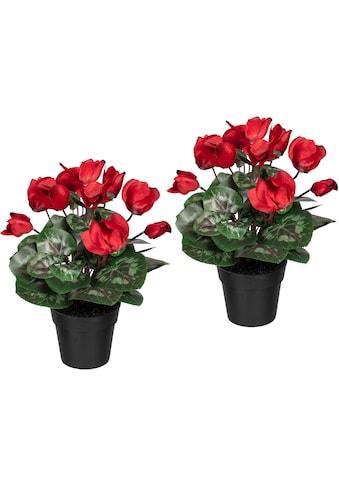 Creativ green Künstliche Zimmerpflanze »Alpenveilchen« (2 Stück) kaufen