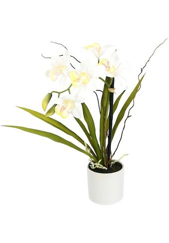 I.GE.A. Kunstorchidee »Orchidee«, im Keramiktopf kaufen