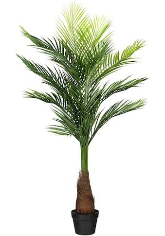 Creativ green Kunstpalme »Goldfruchtpalme« (1 Stück) kaufen