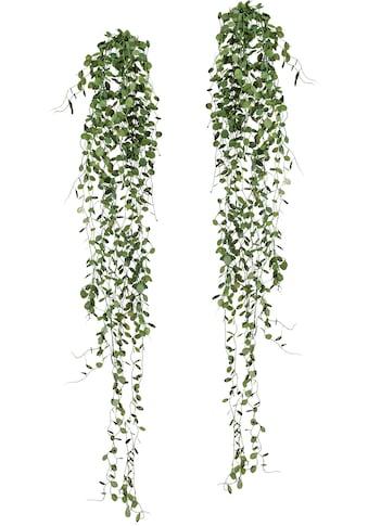 Creativ green Kunstranke »Mühlenbeckia-Hänger«, 2er Set kaufen