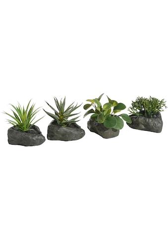 Home affaire Kunstpflanze »Sukkulenten«, 4er Set kaufen