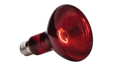 EXO TERRA Terrarienbeleuchtung »Infrared Basking Spot«, 150 W kaufen