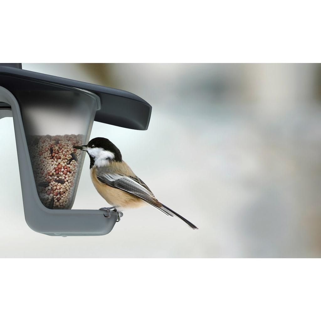 Prosperplast Vogelhaus »Birdyfeed Double«, BxTxH: 28x18,5x17,3 cm