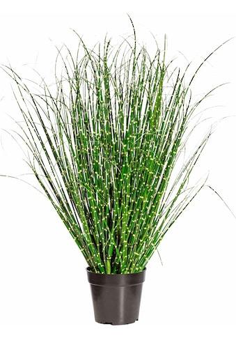 Creativ green Kunstgras »Miscanthus Zebrinus« (1 Stück) kaufen