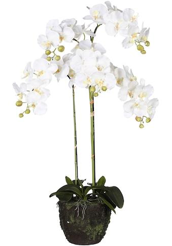 Creativ green Kunstorchidee »Phalaenopsis«, im Ballen kaufen