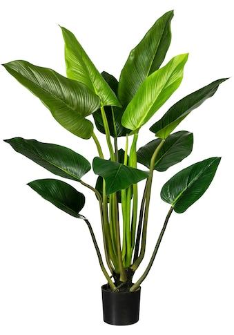 Creativ green Künstliche Zimmerpflanze »Philodendron« (1 Stück) kaufen