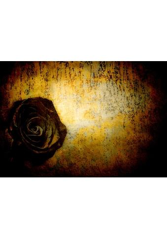 Consalnet Vliestapete »Schwarze Rose«, floral kaufen
