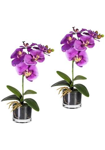 Creativ green Kunstpflanze »Orchidee Phalaenopsis« (Set, 2 Stück) kaufen
