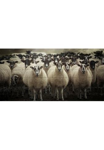 queence Holzbild »Imani«, Tiere, (1 St.) kaufen