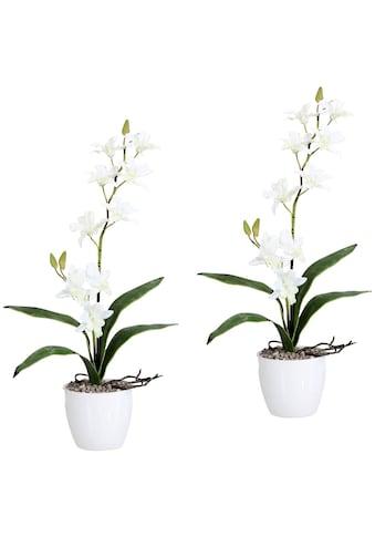 Creativ green Kunstpflanze »Orchidee Dendrobie« (Set, 2 Stück) kaufen